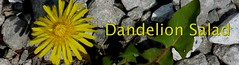 Join the Dandelion Salad Group on MeWe