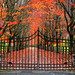 The Garden Gate by louelke - gone til middle of January