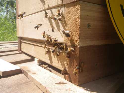 lots of bees and the entrance reducers
