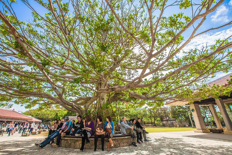 Under a Tree Shuri Okinawa