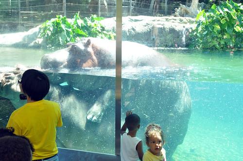 San Diego Zoo #2