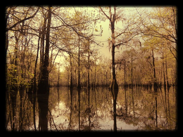 Sparkleberry Swamp Altered
