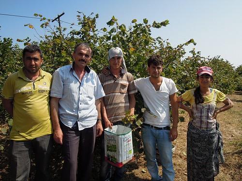 木の実の収穫
