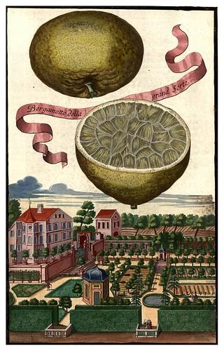 012-Nürnbergische Hesperides-1708-1714- Universitäts- und Landesbibliothek Sachsen-Anhalt