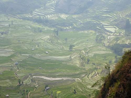 Yunnan13-Yuanyang 23-Laohuzui (6)