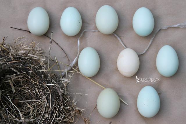 7684 blue eggs
