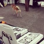 Shiba and my comics at #sarjakuvafestivaalit