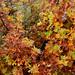 Autumn Mosaic by RandallTT