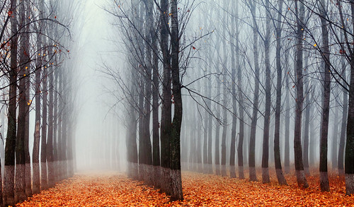 The Labyrinth por Evgeni Dinev