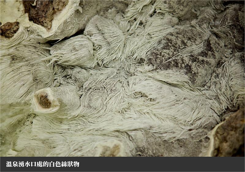 溫泉湧水口附近的白色絲狀物