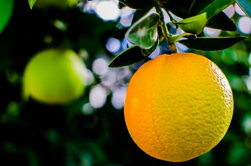 Naranjas 9