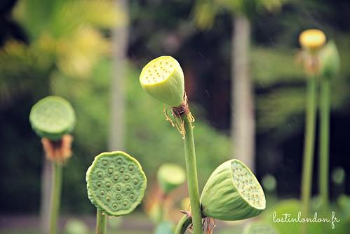 jardin de pamplemousses maurice
