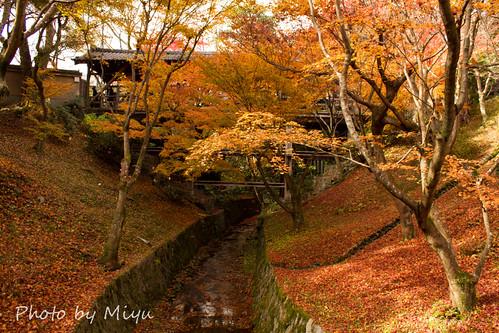 IMG_5169東福寺