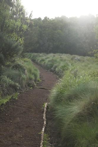 africa mountain kilimanjaro forest tanzania moshi