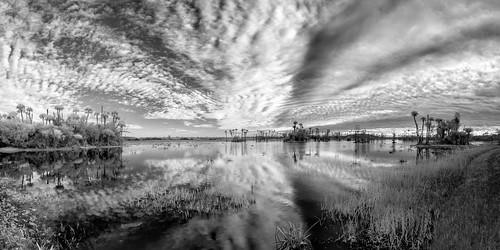 sky blackandwhite bw panorama usa cloud reflection tree water grass landscape ir orlando florida palm infrared centralflorida swampmarsh orlandowetlandspark