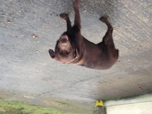 Tue, Feb 18th, 2014 Found Male Dog - Crosserlough, Cavan