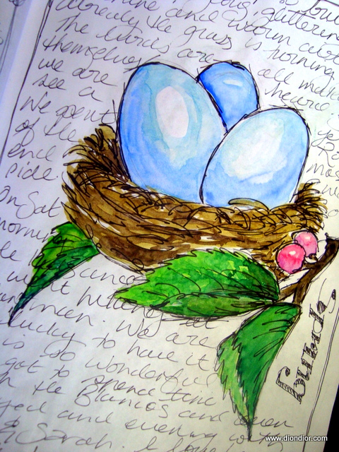 Spring Bird Nest