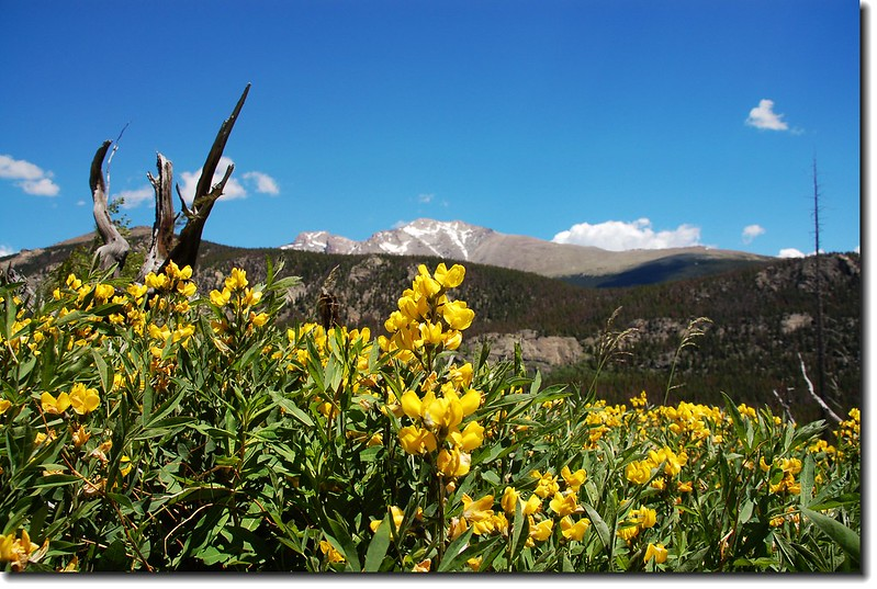 Longs Peak as seen from Ouzel lake trail 1