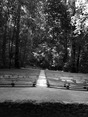 B & W Forested Amphitheater Stage View