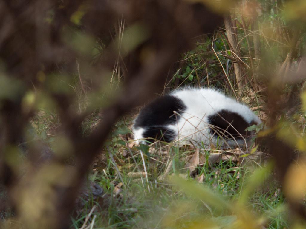 Stray cat(f/4.0)