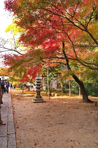 【写真】2012 紅葉 : 光明寺/2020-11-11/IMGP6492