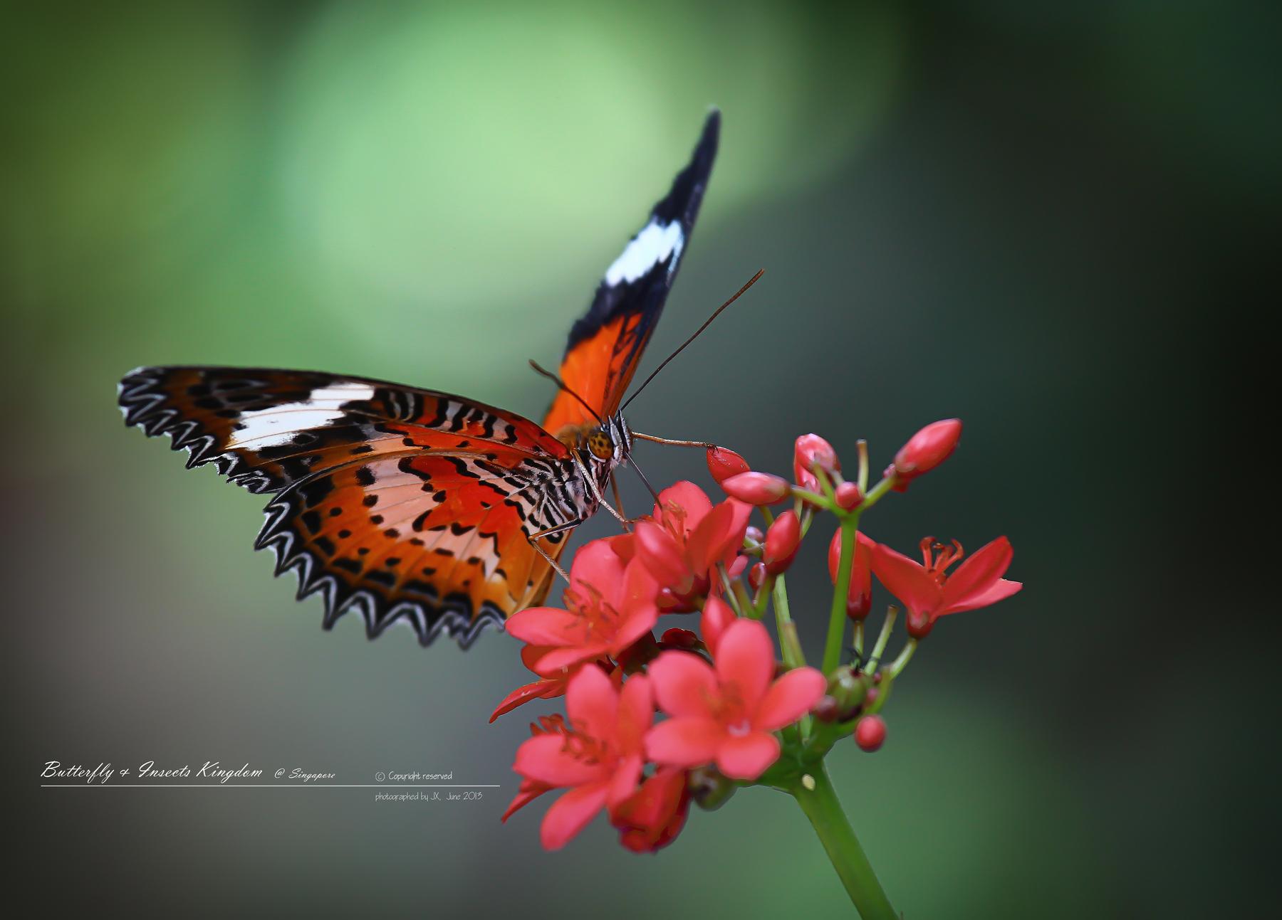 北郭先生非常喜欢蝴蝶