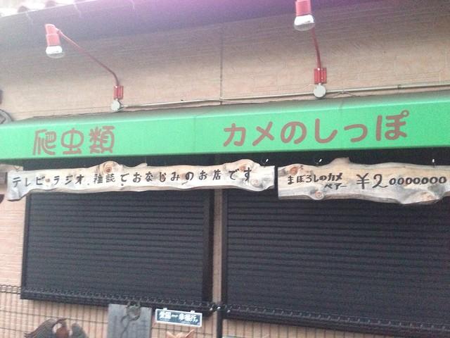 カメ専門店「カメのしっぽ」(東京都小平市)2