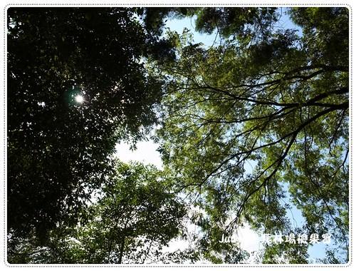惠蓀林場20130928-3