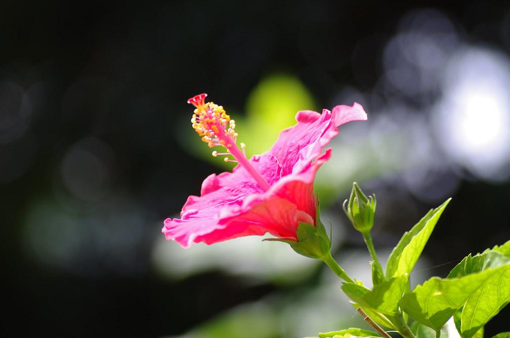 微距小花兒