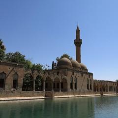 Urfa, Pool of Sacred Fish  / Balıklıgöl
