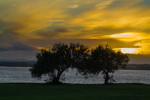 Otterspool Trees at Sunset
