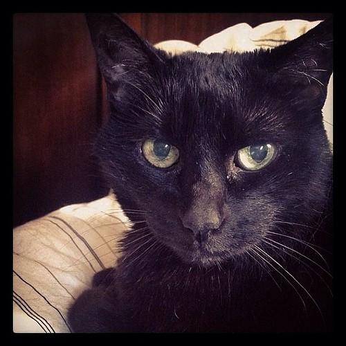 #fmsphotoaday November 8 - Someone I miss #catsofinstagram