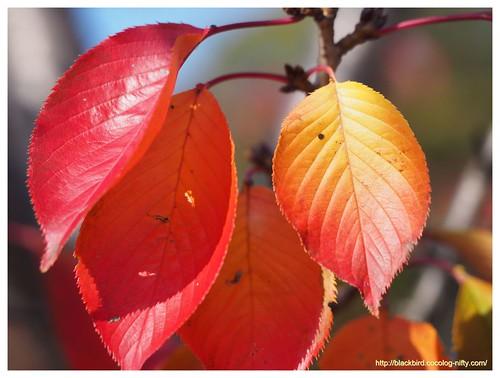 Autumn dayn #04