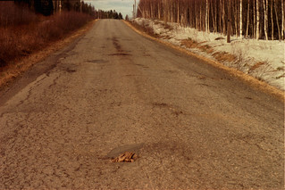 Finland frost heave stumps through the road - Copy.JPG