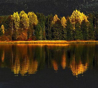 Alpine Autumn - Alta Lake II