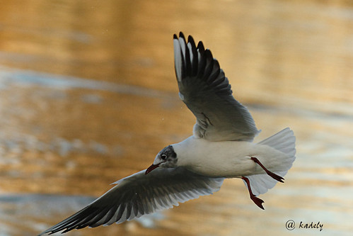 IMG_8009 Mouette