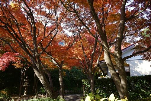 紅葉真っ盛り by leicadaisuki