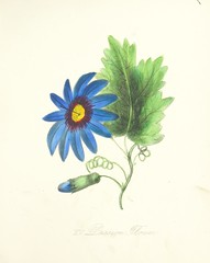 """British Library digitised image from page 65 of """"Flowers, Earth's silent voices. Sketched and painted by S. G [and accompanied with select verses]"""""""