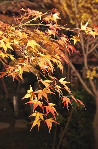 【写真】2013 紅葉 : 天授庵/2020-05-17/IMGP3749