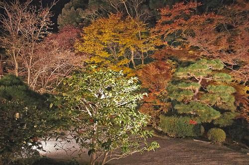 【写真】2013 紅葉 : 天授庵/2020-05-17/IMGP3729