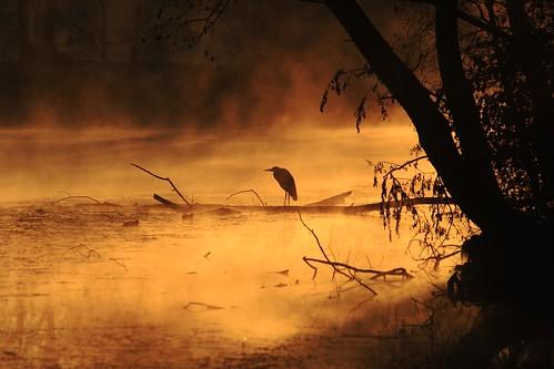 Airone cenerino in silhouette by Claudio61 una foto ferma un ricordo nel tempo