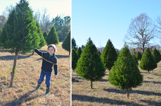 Picking our Christmas tree