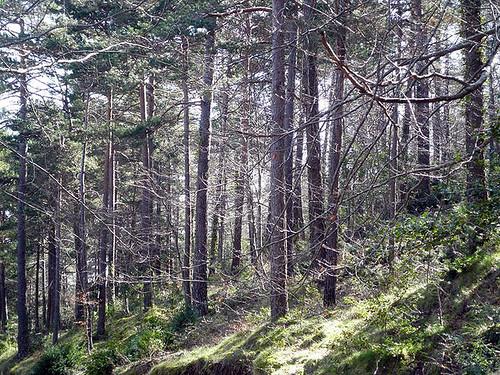 El Serradell_forest