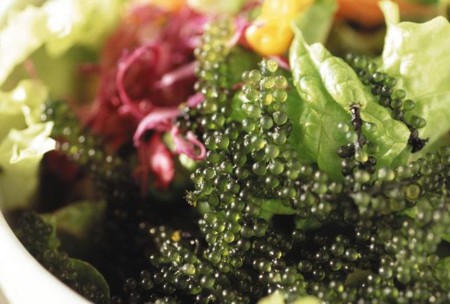 13.Sea grapes_seaweed taked in the  Okinawa ocean