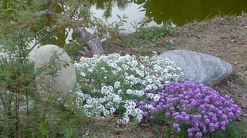 Giardini zen e giapponesi ichiro fukushima - Giardini giapponesi ...