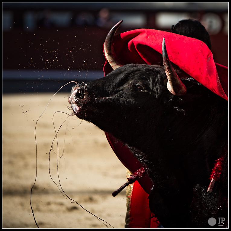 toro-en-manoletina-de-Jiménez-Fortes