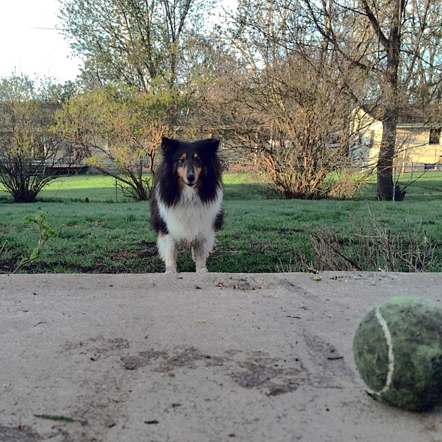 It's ball time somewhere