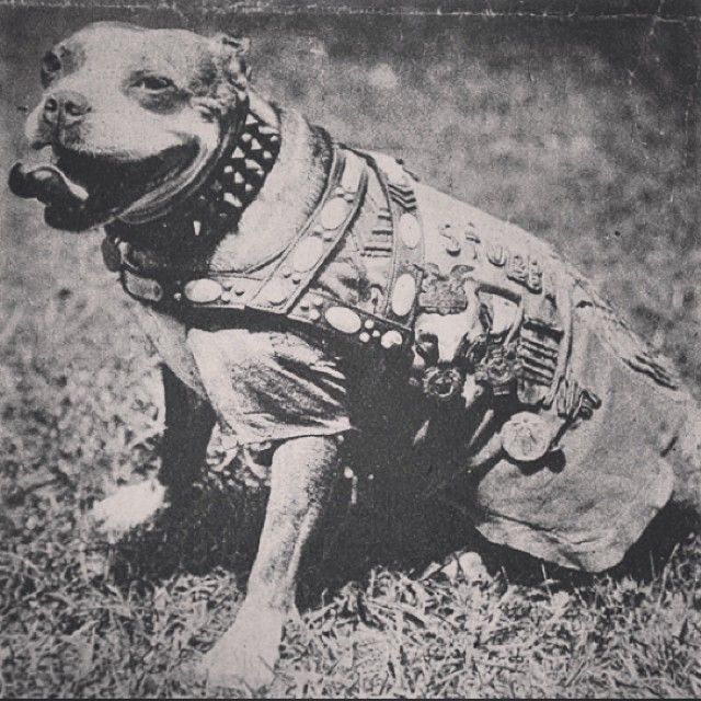 This is Sergeant Stubby, the most decorated dog of WWI.