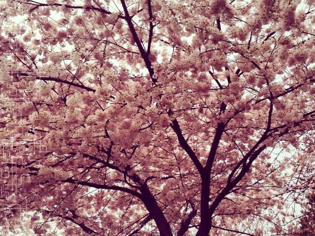 Primavera em Vancouver