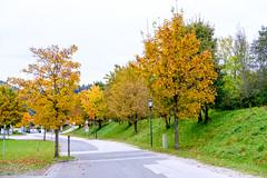 Herbst in Oberau